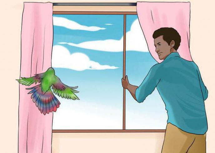 Сонник птица залетевшая в квартиру. к чему снится птица залетевшая в квартиру видеть во сне - сонник дома солнца