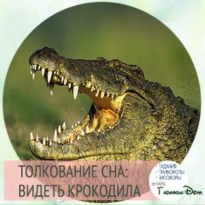 К чему снятся женщине крокодилы - подробное толкование