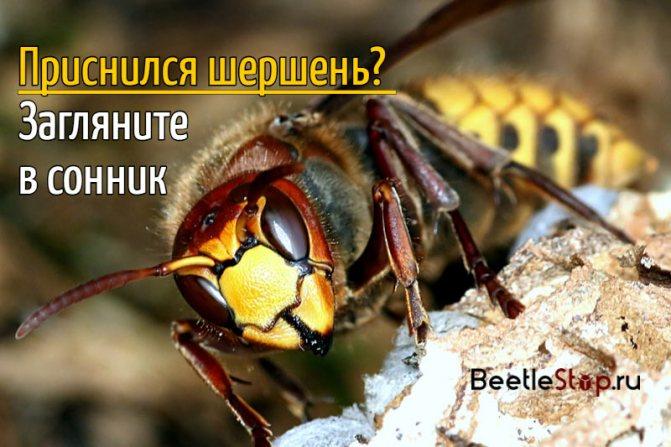 Давит насекомых личинки