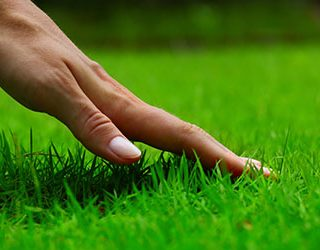 Косить сухую траву