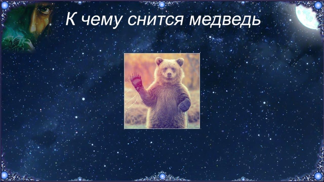 К чему снится медведь женщине — толкования по соннику
