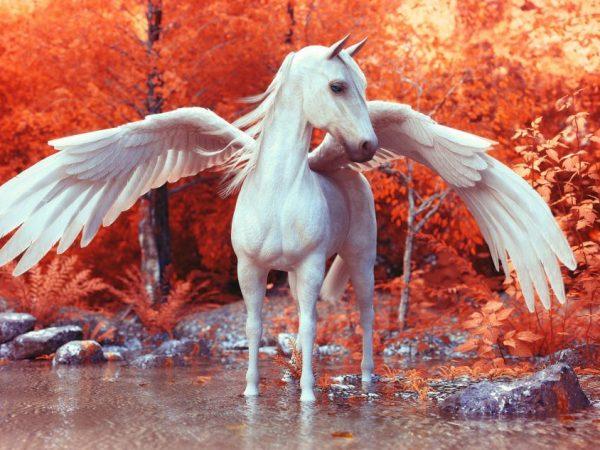 Девушки лошади