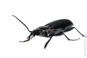 К чему снятся насекомые: всякие, много, рой, много насекомых во сне.