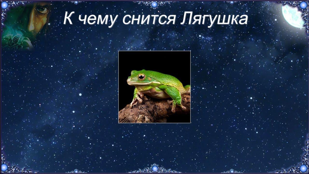 К чему снятся лягушки