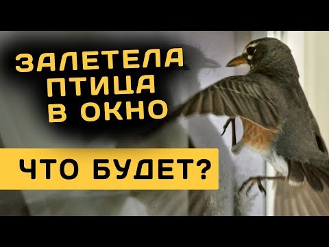 Сонник птица залетевшая в дом. к чему снится птица залетевшая в дом видеть во сне - сонник дома солнца