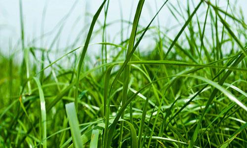 К чему снится трава. видеть во сне трава - сонник дома солнца