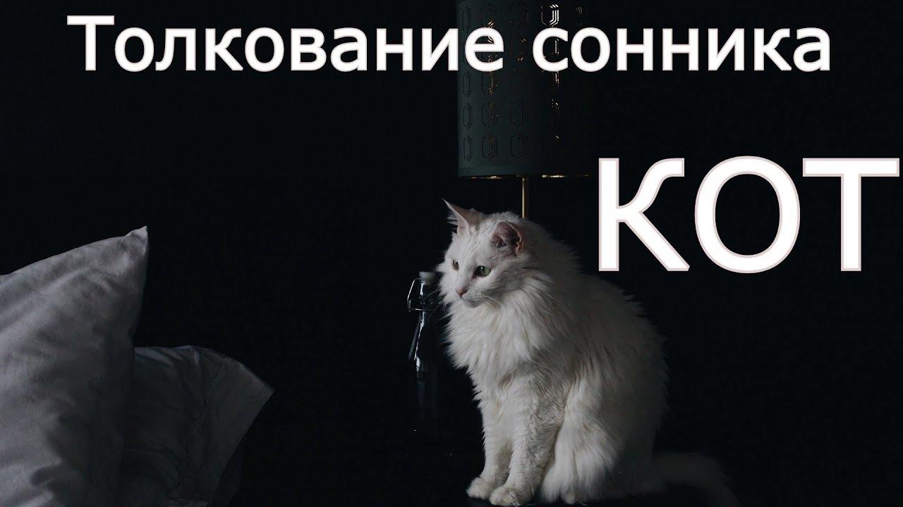 Сонник черный жирный кот. к чему снится черный жирный кот видеть во сне - сонник дома солнца