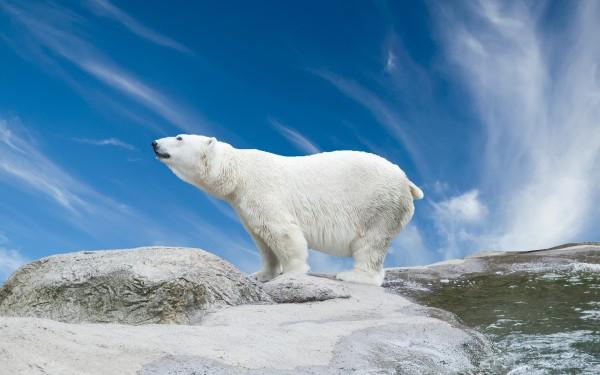 Сонник медведь, к чему снится медведь, во сне медведь