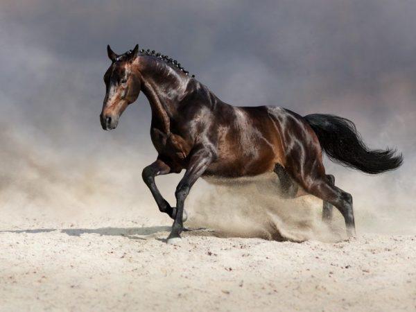 Видеть много лошадей