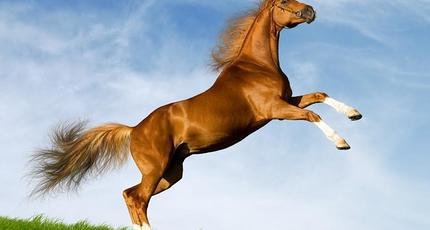 Сонник красивые лошади. к чему снится красивые лошади видеть во сне - сонник дома солнца