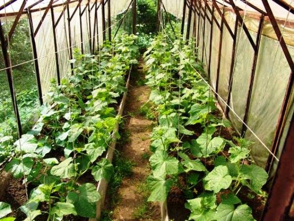 Сонник огород с луком. к чему снится огород с луком видеть во сне - сонник дома солнца