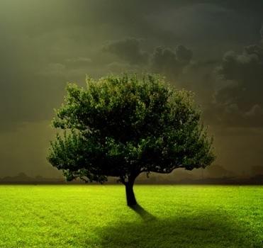 Сонник копать траву. к чему снится копать траву видеть во сне - сонник дома солнца