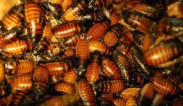 Сонник убивать жуков тараканов и червяков. к чему снится убивать жуков тараканов и червяков видеть во сне - сонник дома солнца