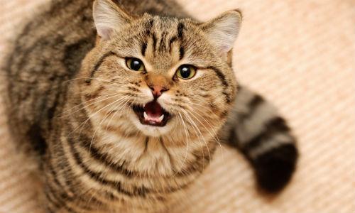 Сонник ласковый жирный кот. к чему снится ласковый жирный кот видеть во сне - сонник дома солнца