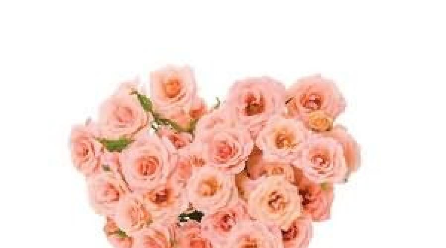Сонник роза, к чему снится роза, во сне роза