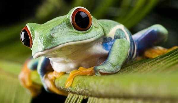 К чему снится лягушка. видеть во сне лягушка - сонник дома солнца