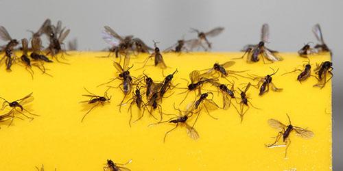 Убивать жуков тараканов и червяков