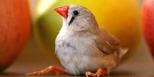 Сонник птицы залетели в постель. к чему снится птицы залетели в постель видеть во сне - сонник дома солнца