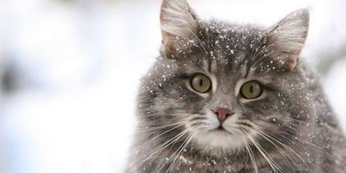 Сонник толстая кошка. к чему снится толстая кошка видеть во сне - сонник дома солнца