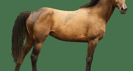 Сонник лошадь для женщины. к чему снится лошадь для женщины видеть во сне - сонник дома солнца