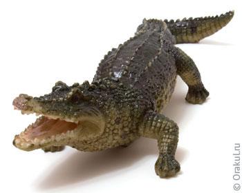 К чему может сниться женщине крокодил — какое будущее ждет и что делать