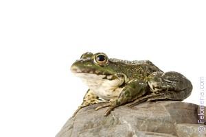 К чему снятся лягушки или жабы – толкование по разным сонникам к чему снятся лягушки или жабы – толкование по разным сонникам