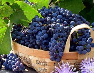 К чему снится виноград: основные толкования сновидения. к чему приснился виноград
