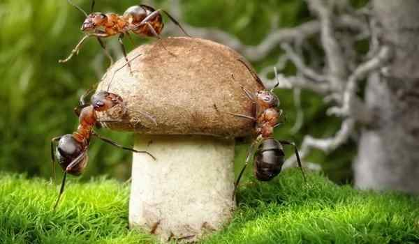 Давить во сне тараканов и мышей