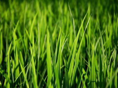 Сонник косить зелёную траву. к чему снится косить зелёную траву видеть во сне - сонник дома солнца
