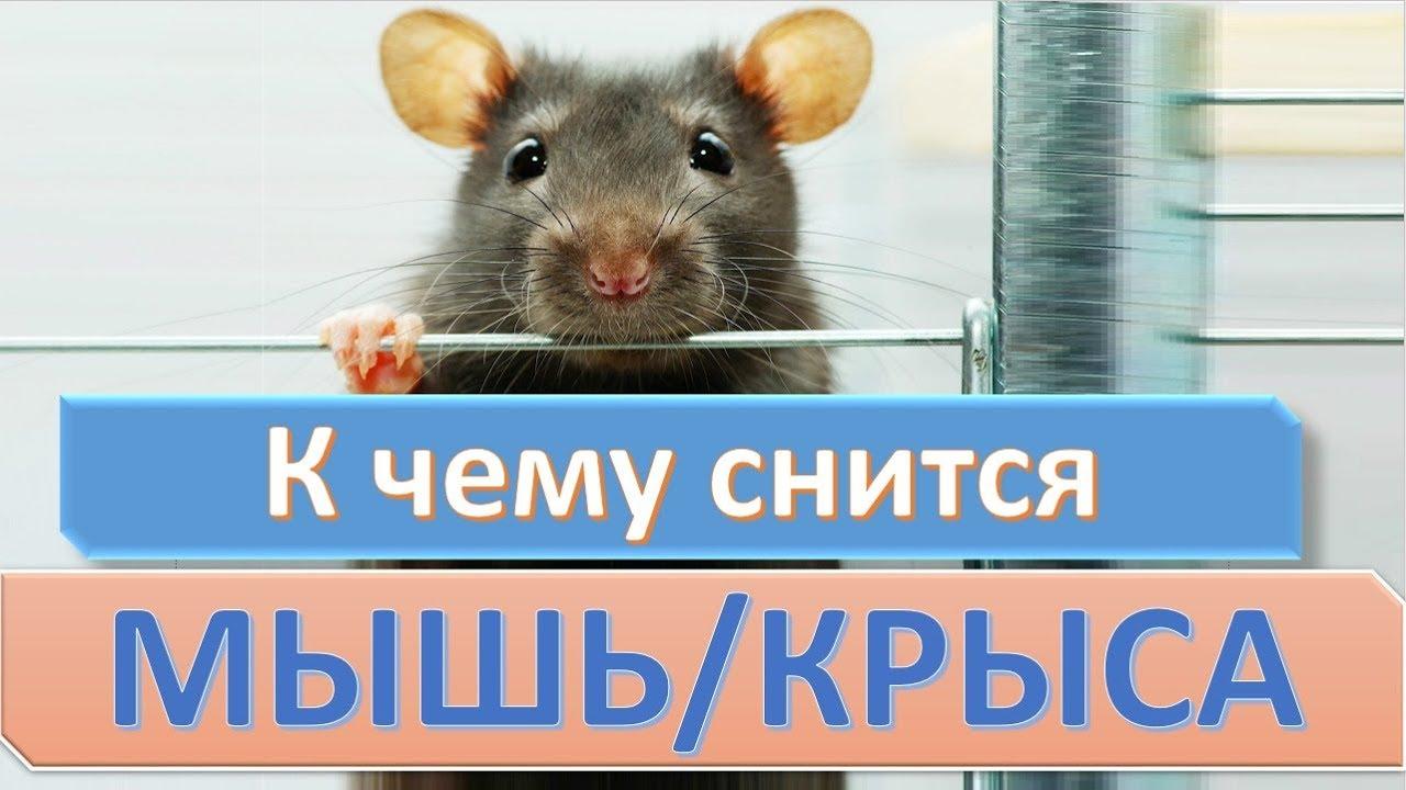 Мышь кидается