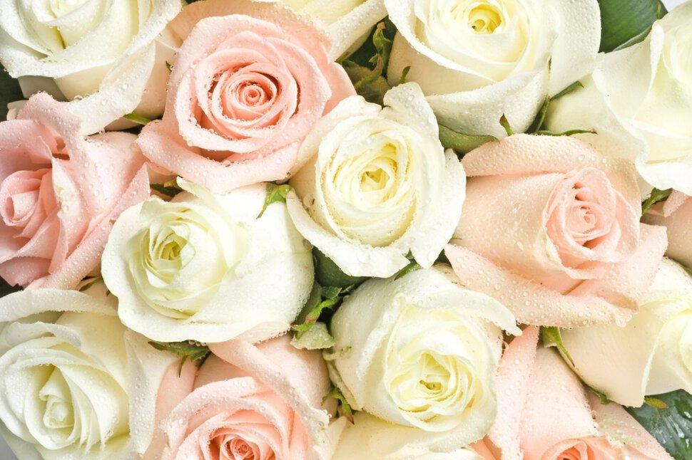Сонник куст роз. к чему снится куст роз видеть во сне - сонник дома солнца