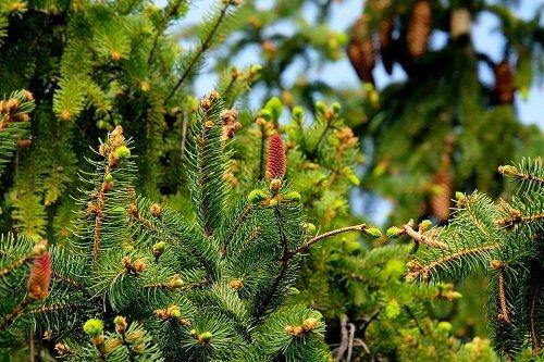 Сонник елка в лесу. к чему снится елка в лесу видеть во сне - сонник дома солнца