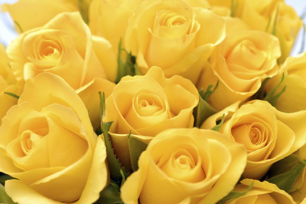 Сонник букет белых и красных роз. к чему снится букет белых и красных роз видеть во сне - сонник дома солнца