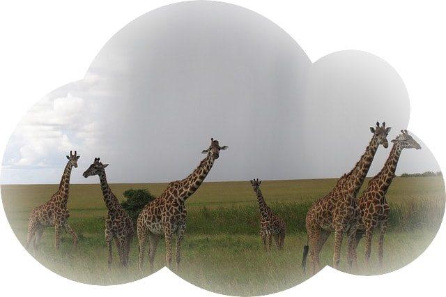 Сонник голова жирафа. к чему снится голова жирафа видеть во сне - сонник дома солнца