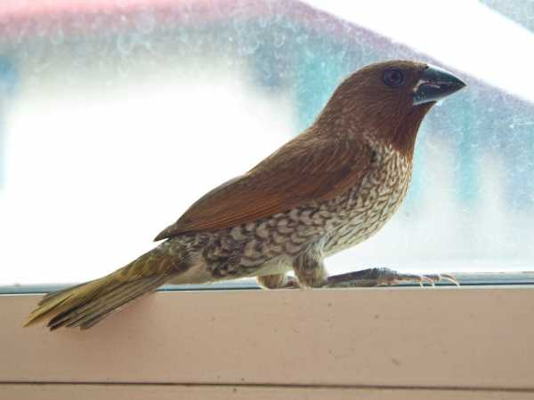 Сонник птица залетевшая в дверь. к чему снится птица залетевшая в дверь видеть во сне - сонник дома солнца