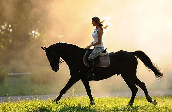 К чему снится конь. видеть во сне конь - сонник дома солнца