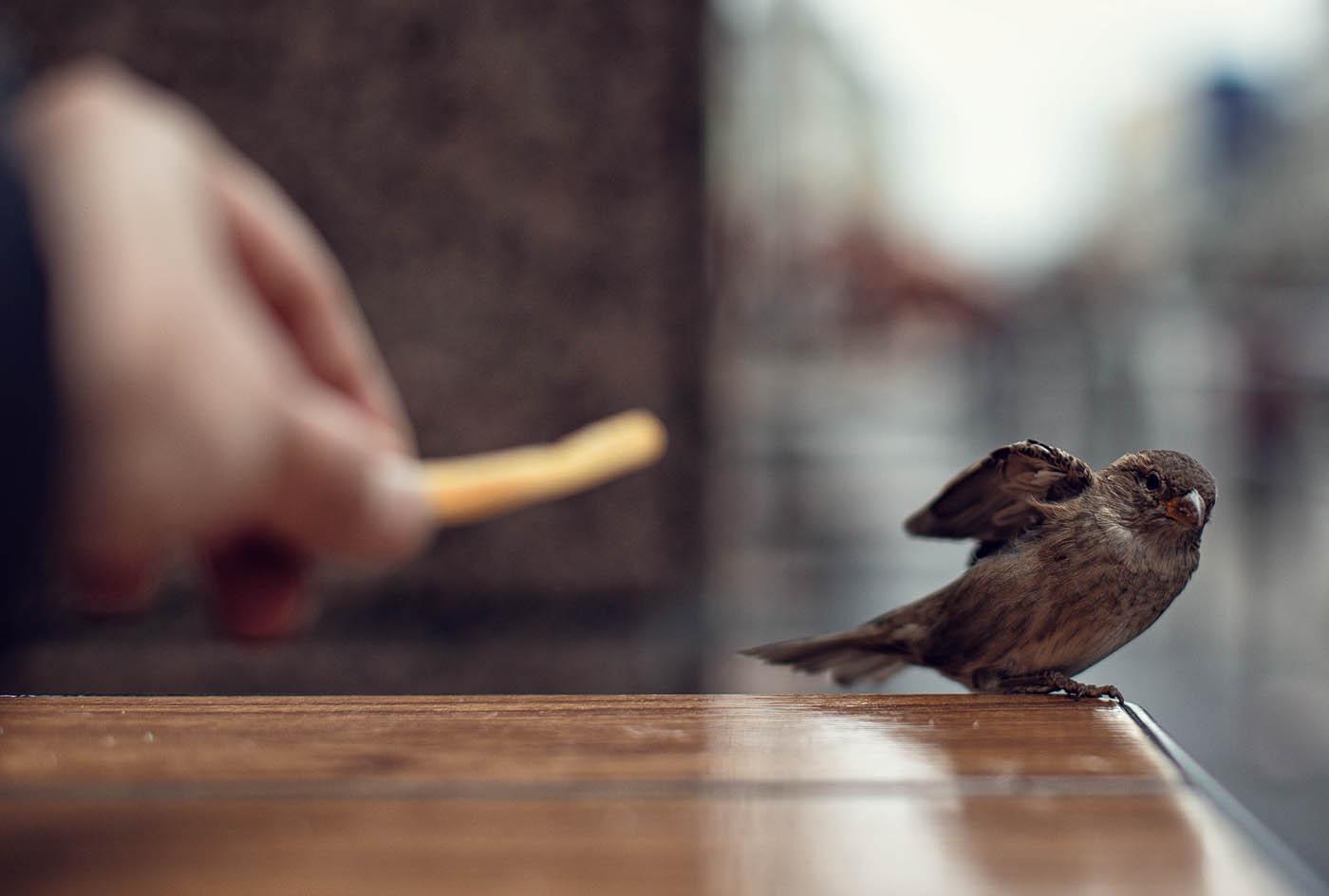 Сонник птицы залетели в дом к чему снится. к чему снится птицы залетели в дом к чему снится видеть во сне - сонник дома солнца. страница 5