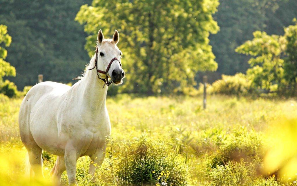 Сонник смотреть на лошадей. к чему снится смотреть на лошадей видеть во сне - сонник дома солнца