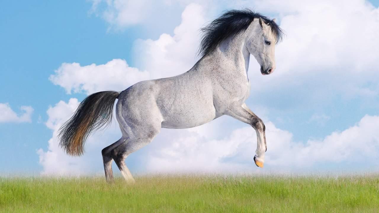 Сонник лошадь искать. к чему снится лошадь искать видеть во сне - сонник дома солнца