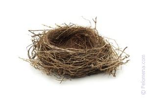 К чему снятся птенцы в гнезде? сон: птица в гнезде с птенцами. толкование снов