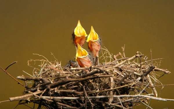 Видеть гнездо во сне: что означает по 70 сонникам?